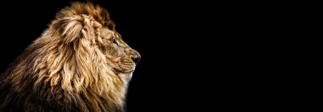 Lion Arts
